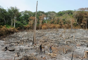 Illegal rainforest logging in Western Area, Sierra Leone