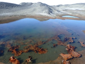 Blue-green algae in a meltwater pond on the McMurdo ice shelf, Antarctica. Captain Scott's team collected samples of the same algae in the same spot in 1902.