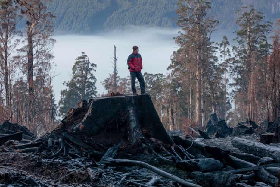 """Steve Pearce, a Forestry Watch member and self-described """"tree nerd"""" stands on top of a felled tree in the adjoining area in the Huon Valley."""