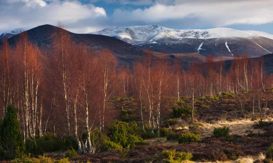 The Rothiemurchus Forest and Cairngorms in winter.