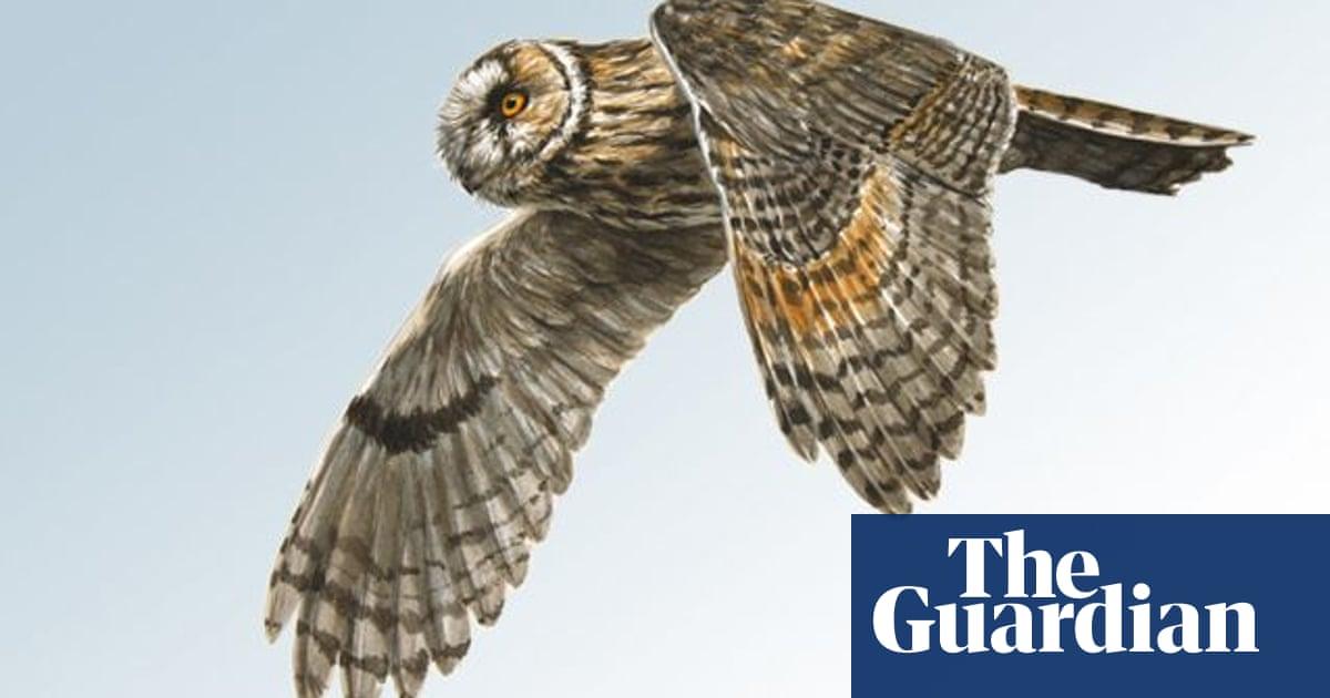 Birdwatch Long Eared Owl Birdwatching The Guardian