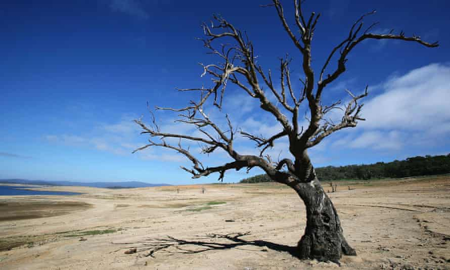 A withered tree stands in drought-affected Lake Eucumbene in New South Wales in 2007