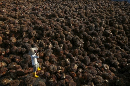 A worker collects palm oil fruit inside a factory in Sepang, outside Kuala Lumpur, Malaysia