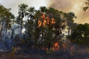 A fire burns a tract of the Amazon jungle.