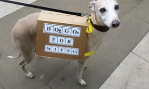'Doggos for science' - even the dogs are out in force to show their support.