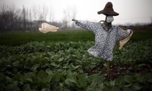 A scarecrow was given a surgical mask in a field in Hubei province, China, last week.
