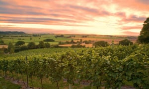 Smith & Evans vineyard
