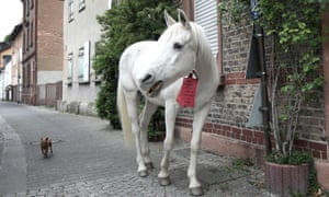 The 25-year-old horse, named Jenny, walks the streets followed by a small dog during his daily walk in Fechenheim, near Frankfurt am Main, western Germany, on April 28, 2020.