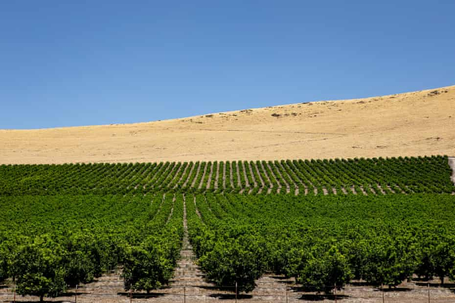 Growers in California have continued to use nearly a million pounds of chlorpyrifos each year.