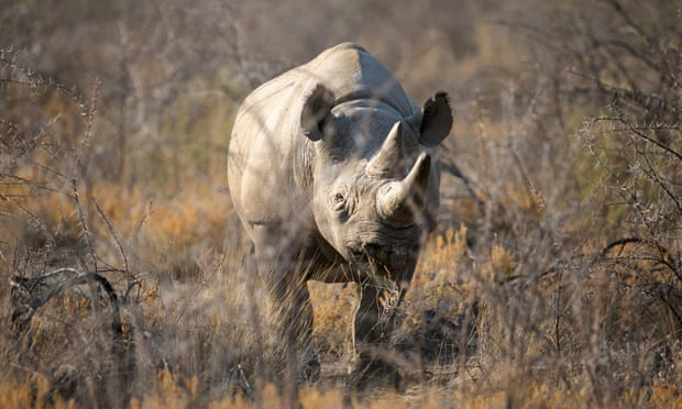Eight men convicted in French court for trafficking rhino horn and ivory