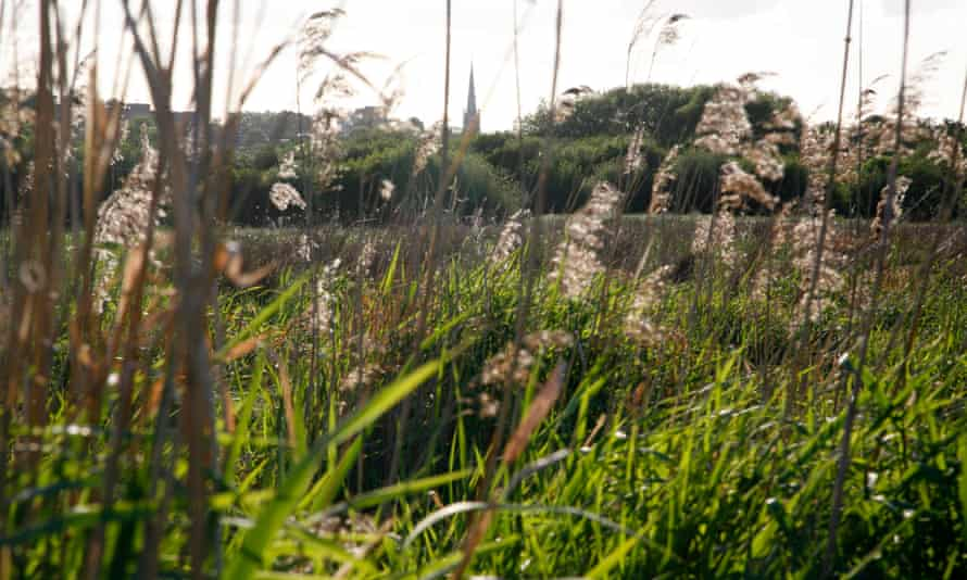 The view across Walthamstow Marshes to Stamford Hill, London.