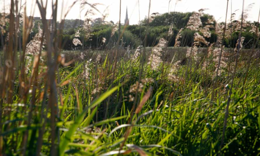 View across Walthamstow marshes to a church on Stamford Hill, London, UK.