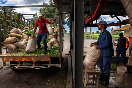 Workers unload goods at the Bois Cheri tea factory in Mauritius