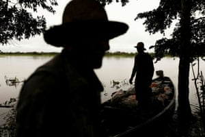 Workers reap manioc to avoid losses during floods on the banks of Solimoes River in Anama.