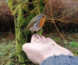 Robin perched on the author's hand.