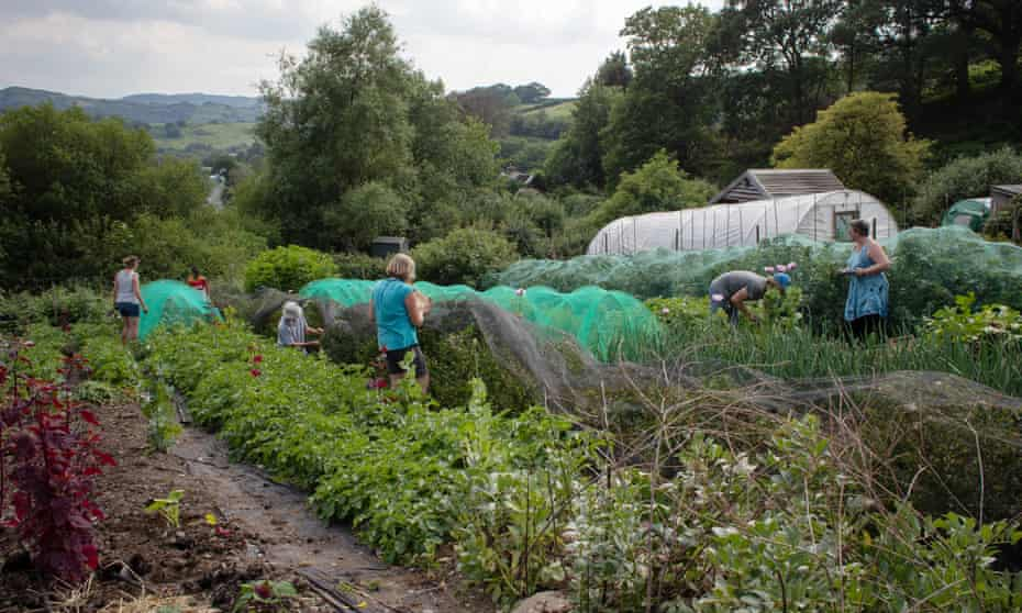 Volunteers plant and grow edible crops on land close to Machynlleth.