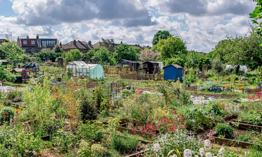 Northfield Allotments, previously known as Ealing Dean. View over Northfields Allotments NW to SE Credit - Nabil Jacob