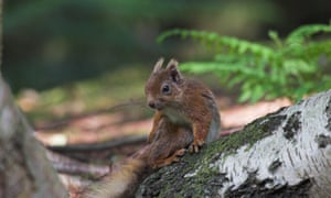 Brownsea is home to one of England's last colonies of red squirrels.