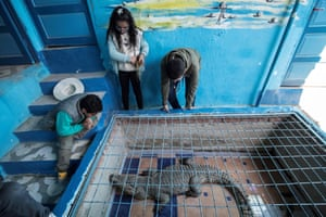 Children watch a crocodile kept inside a cage