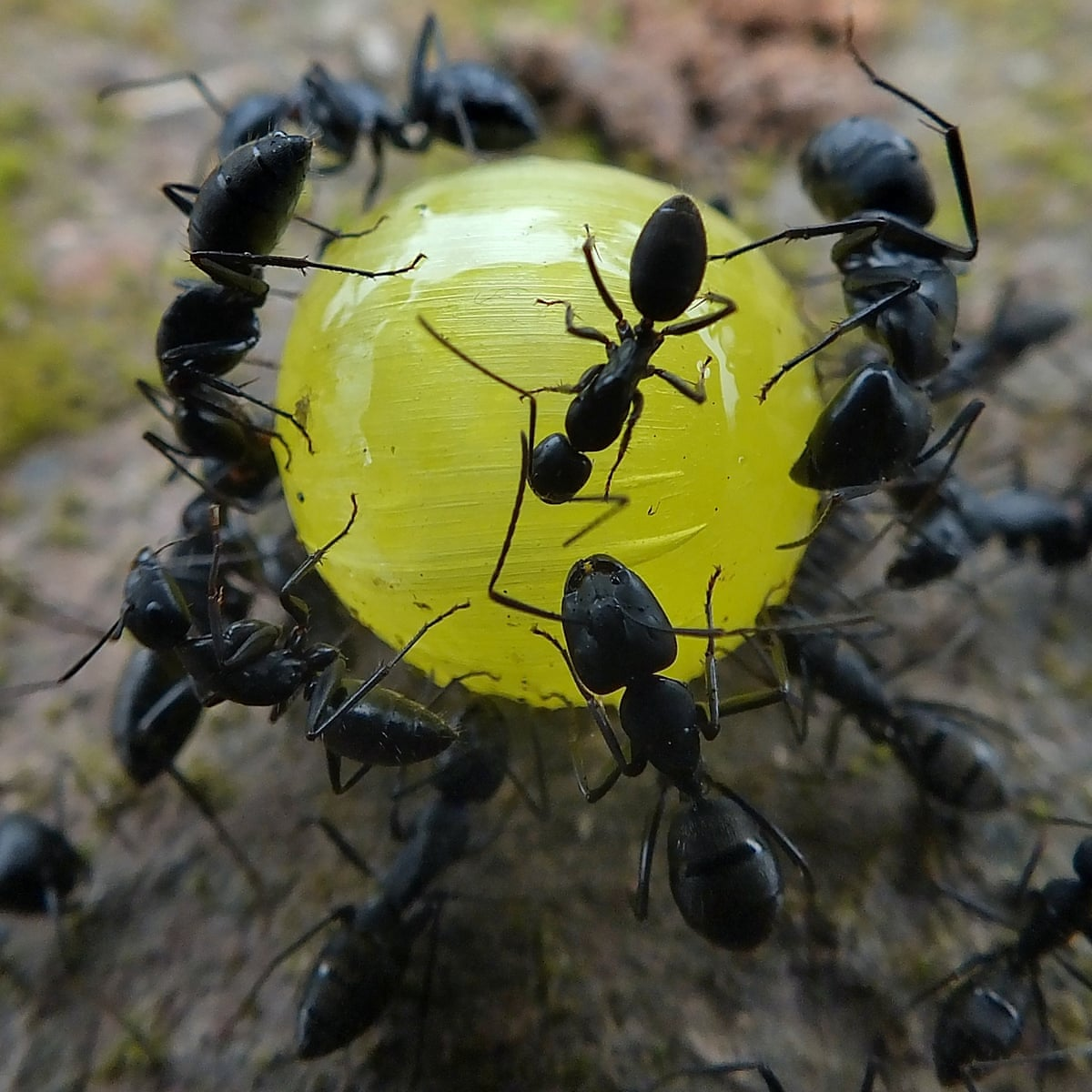 Politicians Are Complicit In The Killing Of Our Insects We Will Be Next Insects The Guardian