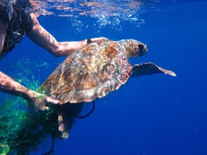 A female loggerhead turtle, called Thunderbird, is rescued after becoming entangled in ghost fishing gear. Save the Med rescued the turtle in July 2020 after being tangled in fishing gear. She was later released with a tracker and then undertook a 6,000 km journey from Spain to Senegal. In February 2021 the signal from its tracker became erratic and indicated the position was near a fishing ground used by trawlers, possibly indicating that it was unintentionally caught by a fishing vessel. The fate of Thunderbird is still unknown