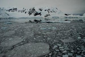 'pancake' ice near Drake Passage