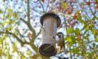 Naturalists flock to Chris Packham's DIY 'Springwatch' on Facebook