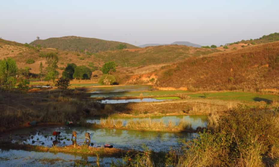A paddy field in Koraput