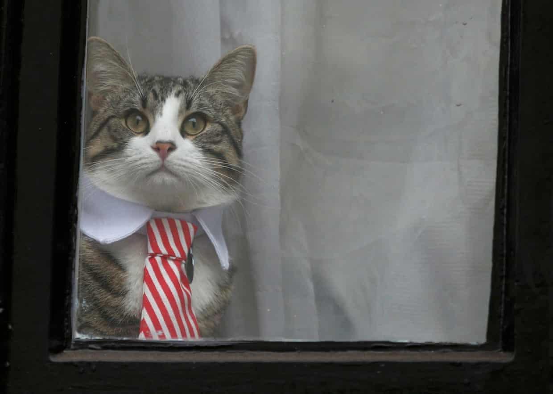 Ecuador tells Julian Assange to Feed His Cat