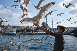 A man feeds seagulls with fish amid the ongoing coronavirus pandemic in Istanbul, Turkey, on 12 September 2020.