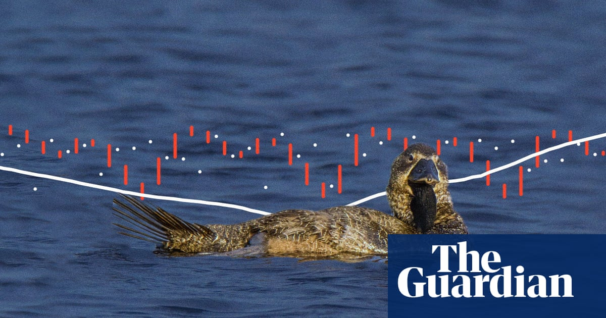 'You bloody fool': Australian talking duck proves birds can imitate speech