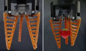 The soft robotic hands are gentle enough to handle soft fruit such as strawberries.