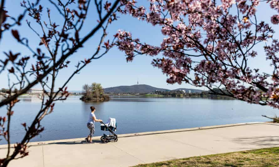 A woman pushes a baby stroller past cherry blossoms by Lake Burley Griffin in Canberra, Australia