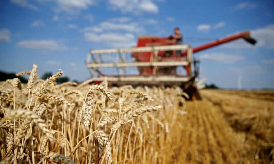 A farmer harvesting a field of wheat