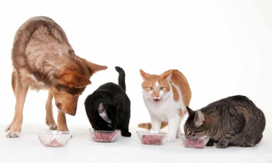 A dog and three cats eating meat out of bowls