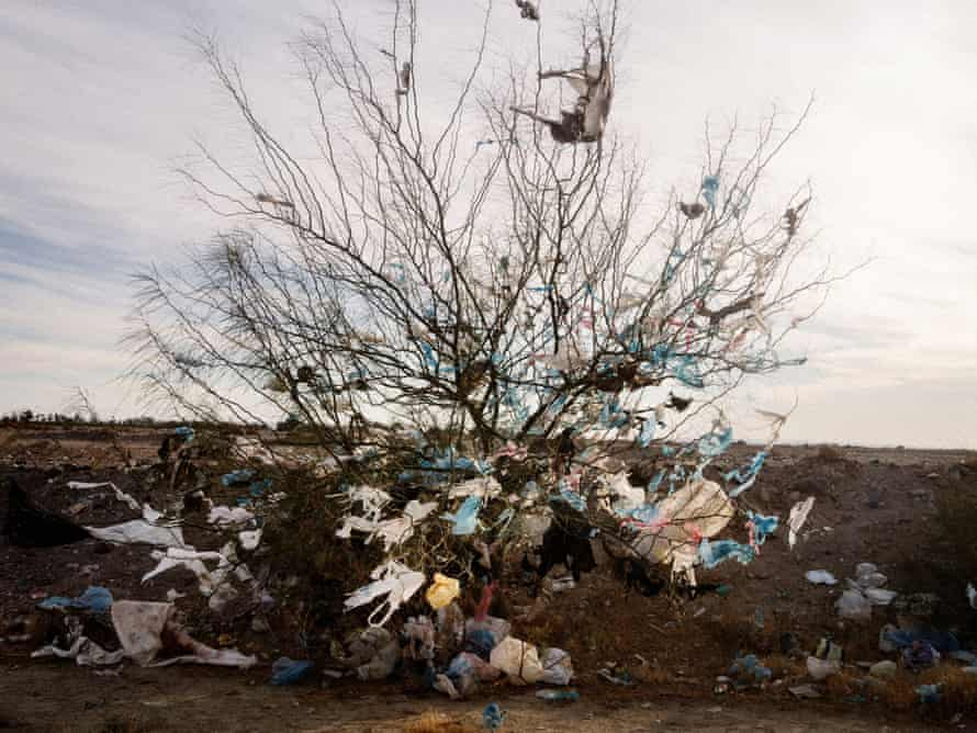 Bags caught on a tree along a desert road on the outskirts of Gafsa governorate in western Tunisia