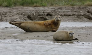 Seals in the greater Thames estuary.