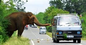 Passersby feed fruits to an elephant along the Kataragama-Buttala road in Kataragama, Sri Lanka