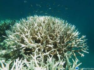 Mission Beach Reefs