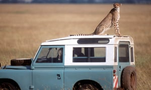 A cheetah sits on a Land Rover in Kenya
