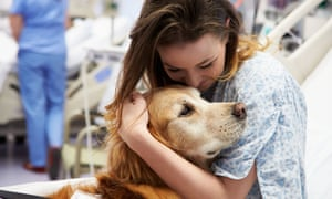 A therapy dog visiting a young patient in hospital
