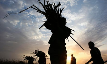 Harvesting sugar cane in Mali