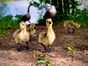 Young Photographer of the Year runner-up: The world is a good place, by Charlotte Bean in Brookmans Park, England We tend to focus on the bad changes that occur in the world around us, yet so much positivity can be found if we look in the right places. Here, young goslings are making the first steps into their world