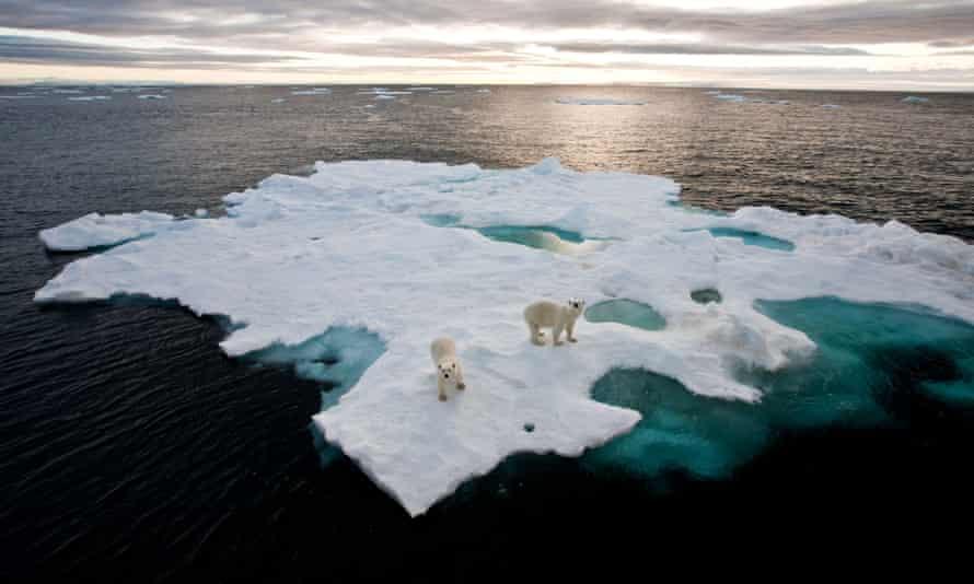Polar bears on an iceberg near Spitsbergen, Norway.