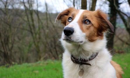Kate's dog Teg