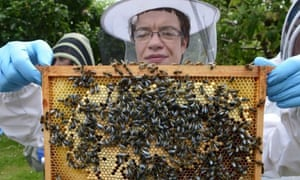 Beekeeper Graínne Downey inspects a hive.
