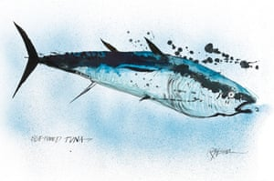 Bluefin Tuna by Ralph Steadman