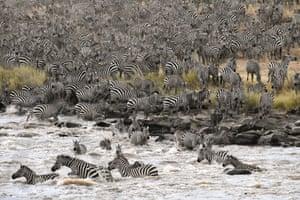The stampede by Lillian Quinn in Maasai Mara national reserve, Kenya