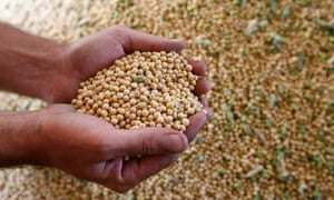 US soy bean exports to China have been hit hard by the trade war between the two countries.