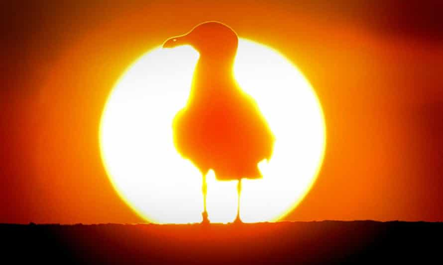 A bird silhouetted against the rising sun in Fife, Scotland